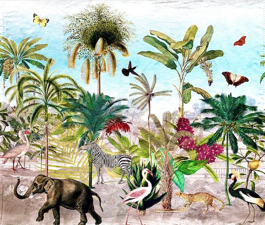 Panama Animals-Paradise